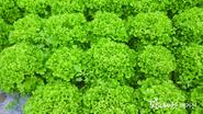 G마크인증 채소 생산  이기종 대표