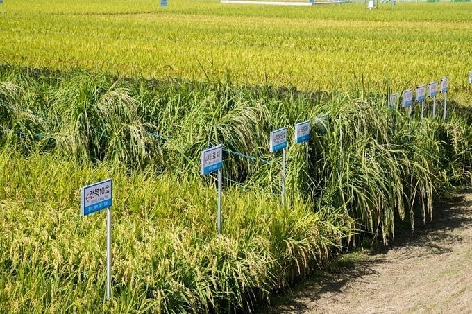 군산시, 명품 군산쌀 생산 총력