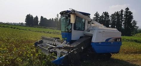 국산 팥 '홍다' 제주지역 기계수확