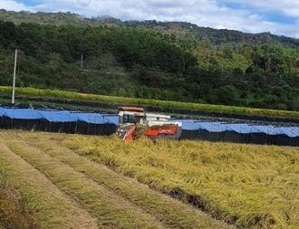 보은군 최고품질 쌀 생산
