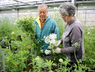 태안군 고효율 단열소재한 고품질 화훼 생산